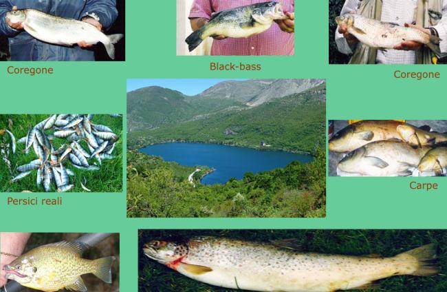 Catture Lago di Scanno